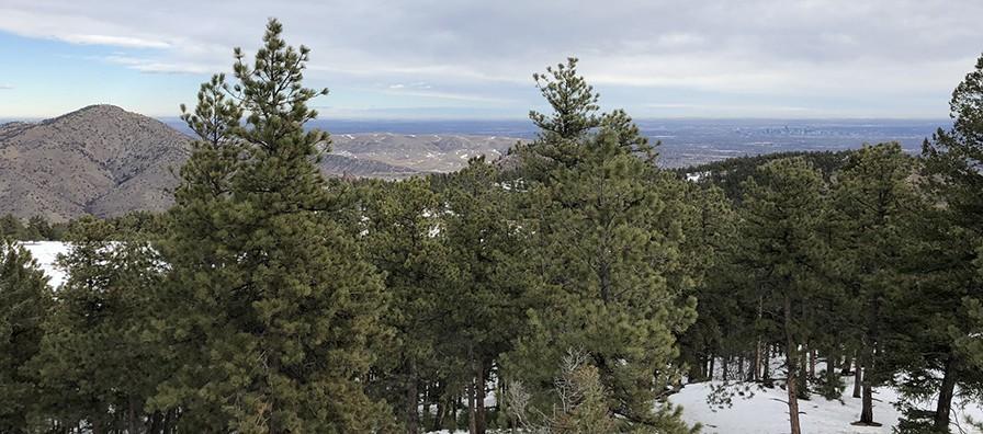 Mount Falcon Looking East