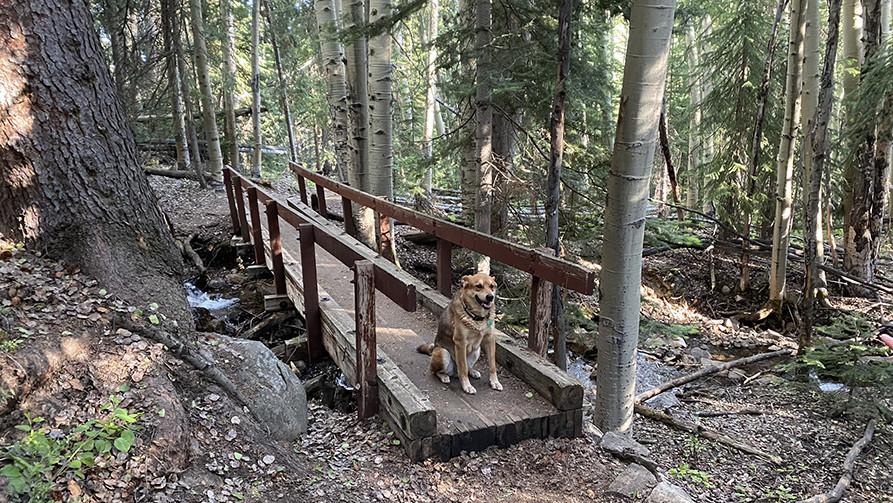 Ranger on the Weller Lake Trail